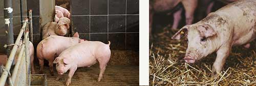 Auslauf- und Tierwohlsystem