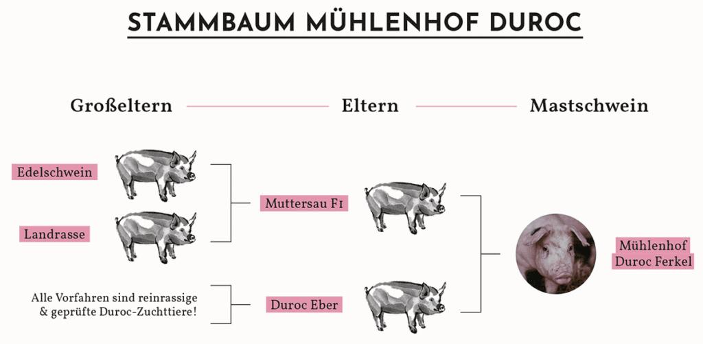 Stammbaum Mühlenhof Duroc